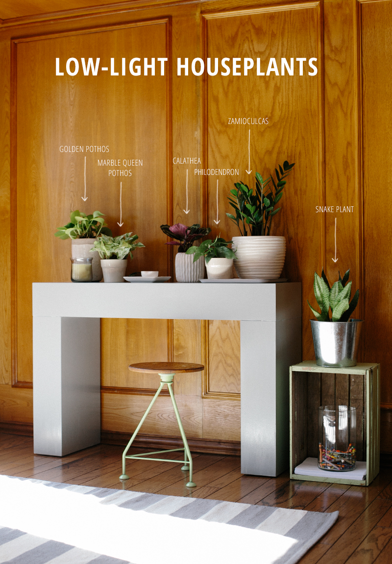 Spring update six low light houseplants warm hot chocolate - Houseplants for low light ...